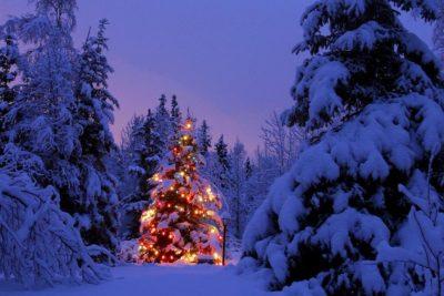 Da Piceno Oggi – Alberi di Natale nelle scuole di Ascoli dal 3 dicembre